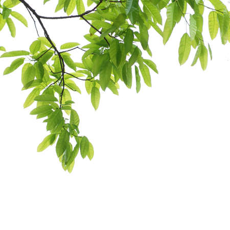 green leaf background Stock Photo - 9480039