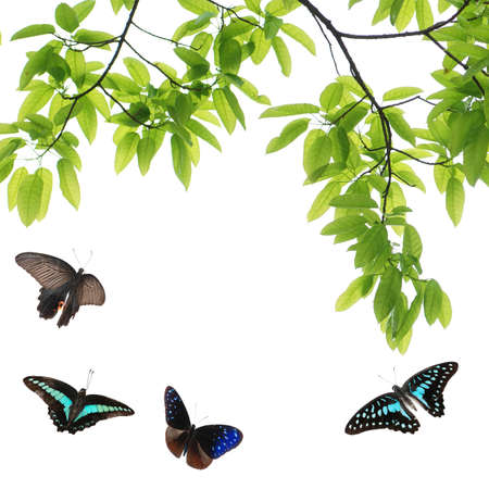 butterfly flying green leaf nature background photo
