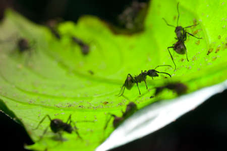 insect ant on green leaf photo