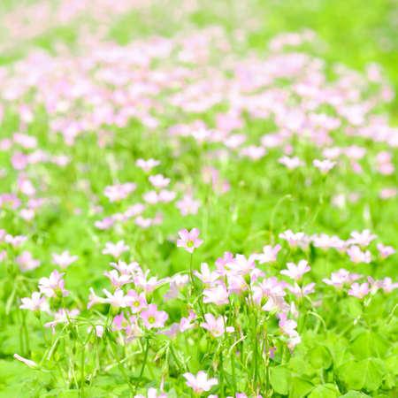 tiny: spring tiny pink flower macro Stock Photo