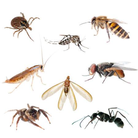 hormiga: Error de insecto animal establece colecci�n Foto de archivo