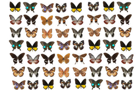 lepidoptera: lepidoptera butterfly background