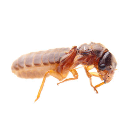 insect termite white ant photo