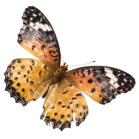 insect butterfly isolated Stock Photo - 9939717