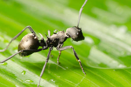 insect ant on green leaf Stock Photo
