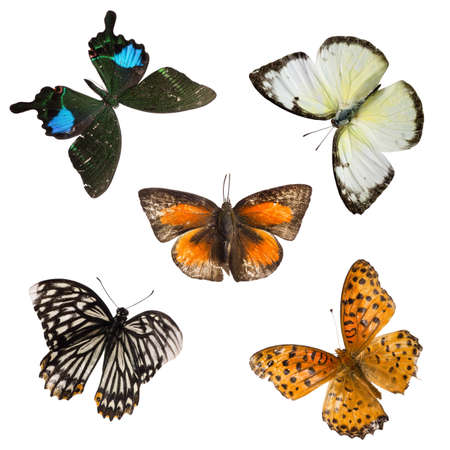 butterfly set collection isolated photo