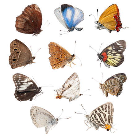color butterfly: butterfly set collection isolated