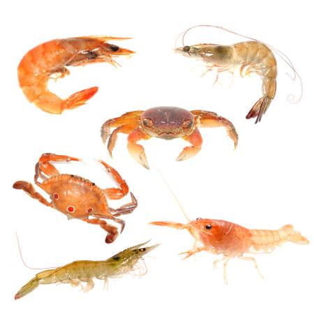 prawns: seafood animal crab crayfish shrimp set isolated on white