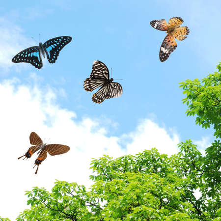 flying butterfly photo