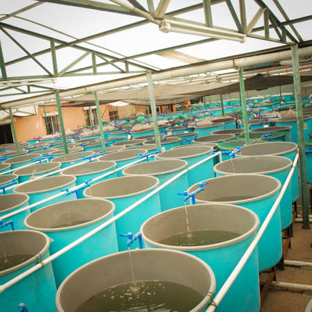Aquaculture in the farm