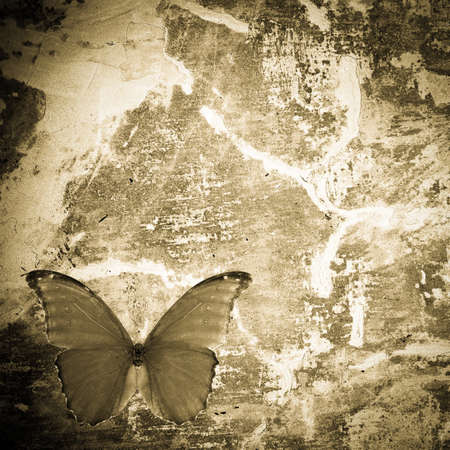 butterfly grunge wall textured backgriund Stock Photo - 11156256