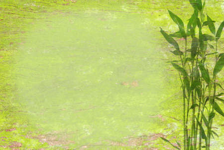 bamboo  background photo