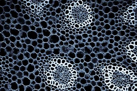 celulas: la biolog�a de formaci�n en ciencias ra�ces de las plantas microsc�picas secci�n Foto de archivo