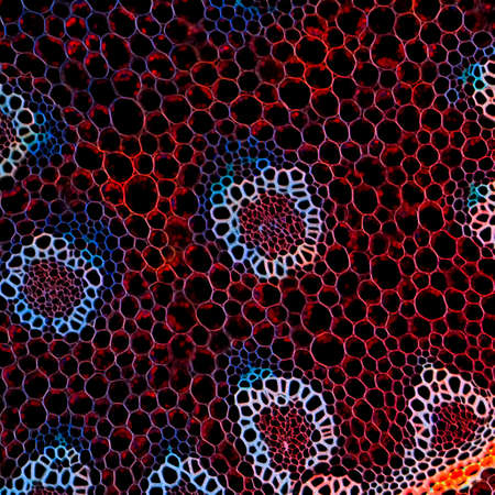 microscopisch: biologie bèta-achtergrond plantenwortels microscopische sectie
