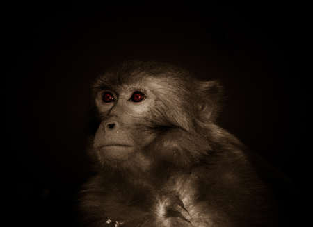 animal monkey portrait photo