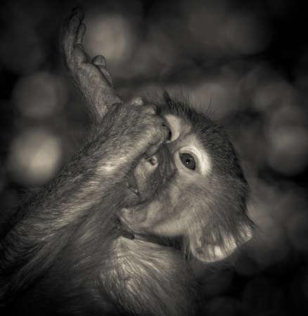 animal monkey yoga portrait photo