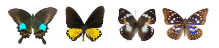 butterflies flying: butterfly collection set isolated in white background Stock Photo