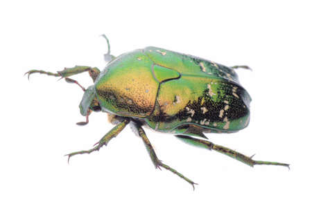 green beetle photo