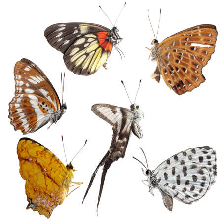 butterfly set side view collection isolated photo