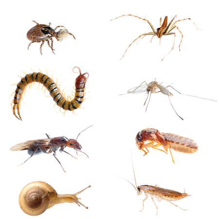 poisonous insect: animal bug set collection isolated Stock Photo