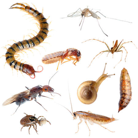 segmented bodies: insect pest bug set collection isolated