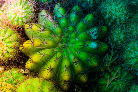 plant cactus tree photo