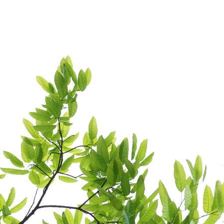 Grünes Blatt Standard-Bild - 12411461