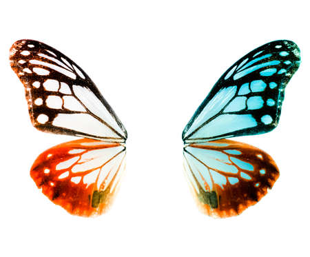 fairy wings: butterfly isolated in white background