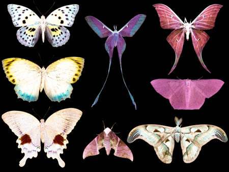 butterfly moth collection set isolated in white background photo