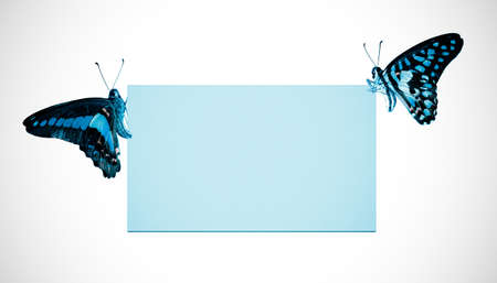 butterflies flying: butterfly blank poster frame background