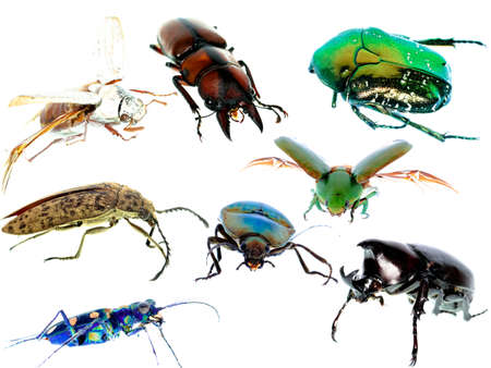 click beetle: insect beetle collection set isolated on white background
