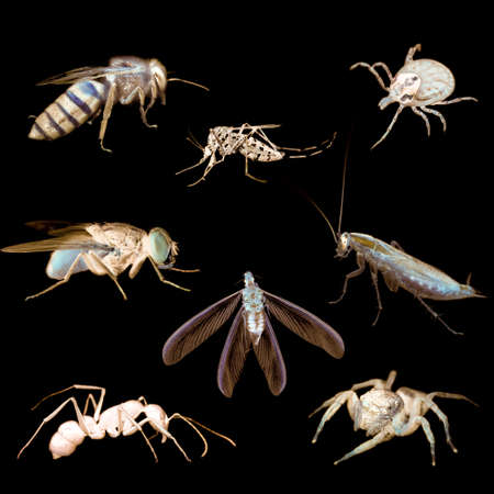 animal insect bug set collection Stock Photo - 12396525