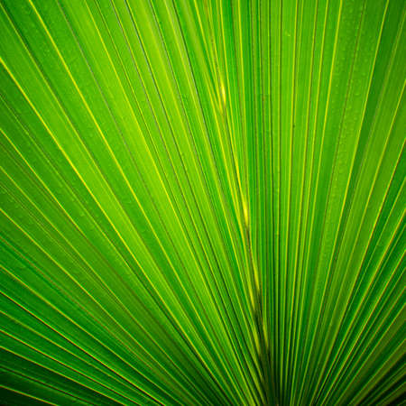 green palm tree leaf close up photo