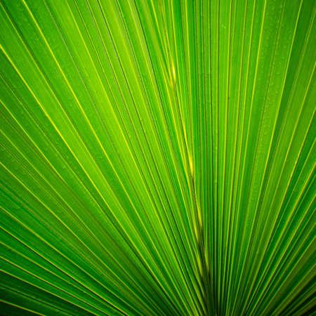 green palm tree leaf close up Stock Photo - 12396776