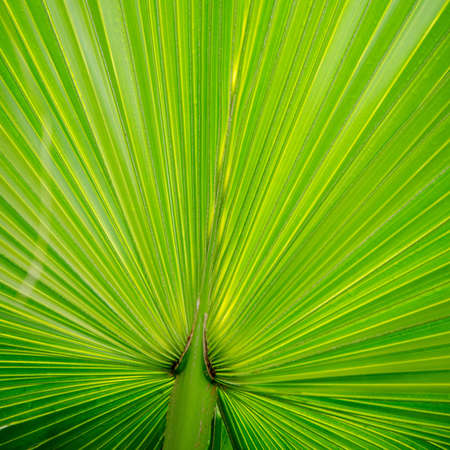 green palm tree leaf close up Stock Photo - 12647727