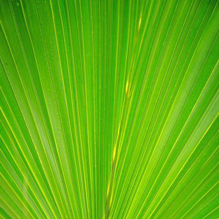 green palm tree leaf close up Stock Photo - 12648090