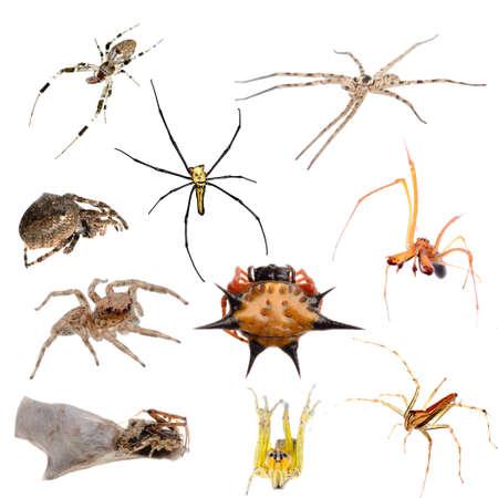 arachnidae: animal set spider isolated collection