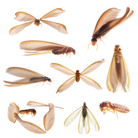 animal set insect termite white ant bug isolated collection photo