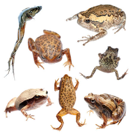 amphibian: animal set frog and toad collection