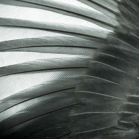 piuma bianca: bird ala piuma texture di sfondo Archivio Fotografico