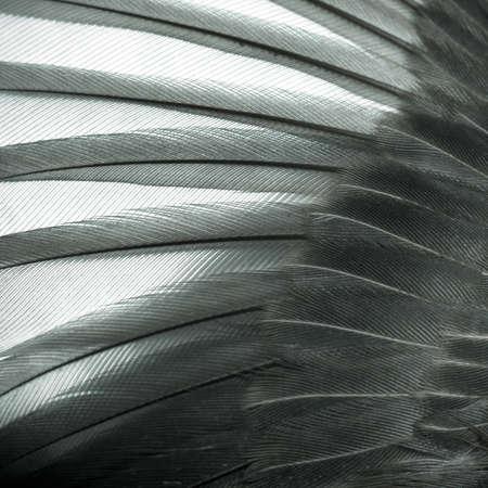Vogel Flügel Feder Textur Hintergrund Standard-Bild - 13462976