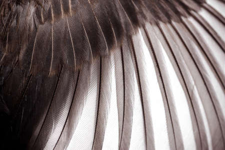 bird wing feather texture background Stock Photo - 13463198
