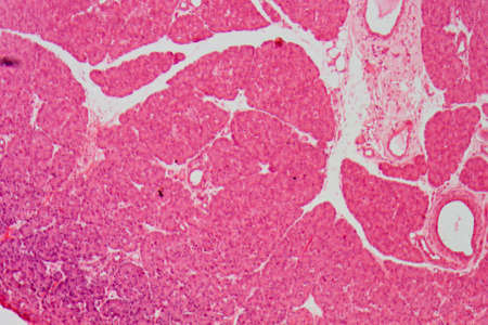 histology: science medical anthropotomy physiology micrograph of small intestinum tenue tissue