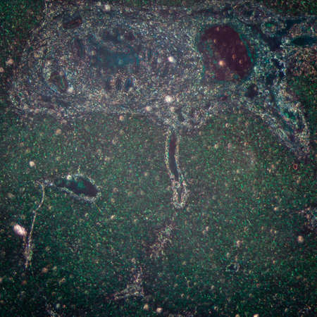 science medical anthropotomy physiology micrograph of liver tissue photo