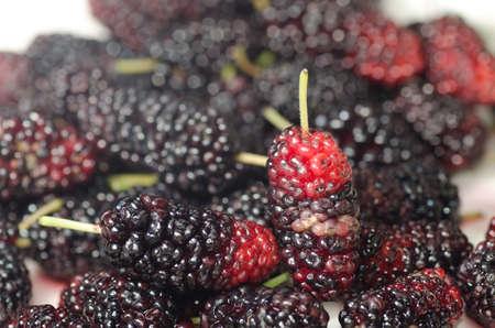 photo of blackberry fruit close up Stock Photo - 13463341