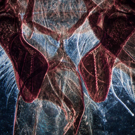microscopy: science microscopy micrograph animal mouth-parts of insect honey bee