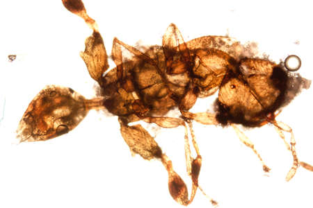 microscopy: science microscopy micrograph animal insect, Magnification 50X