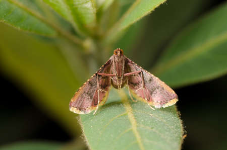 insect moth on green leaf Stock Photo - 13463256
