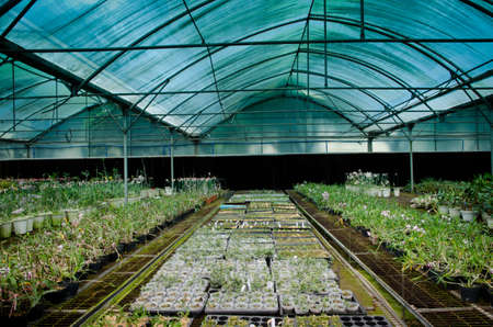 orchid house: plant green house orchid flower nursery Stock Photo