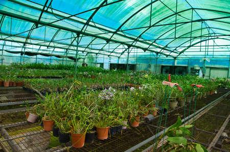 flower nursery: plant green house orchid flower nursery Stock Photo